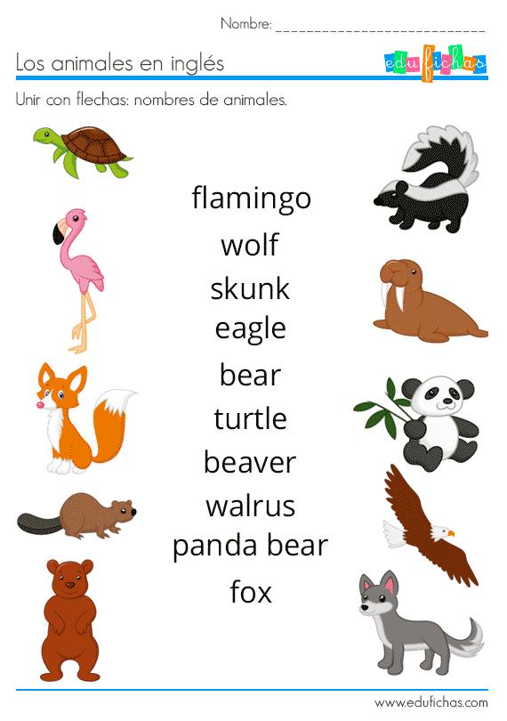 Animales En Inglés Vocabulario Ejercicios Flashcards