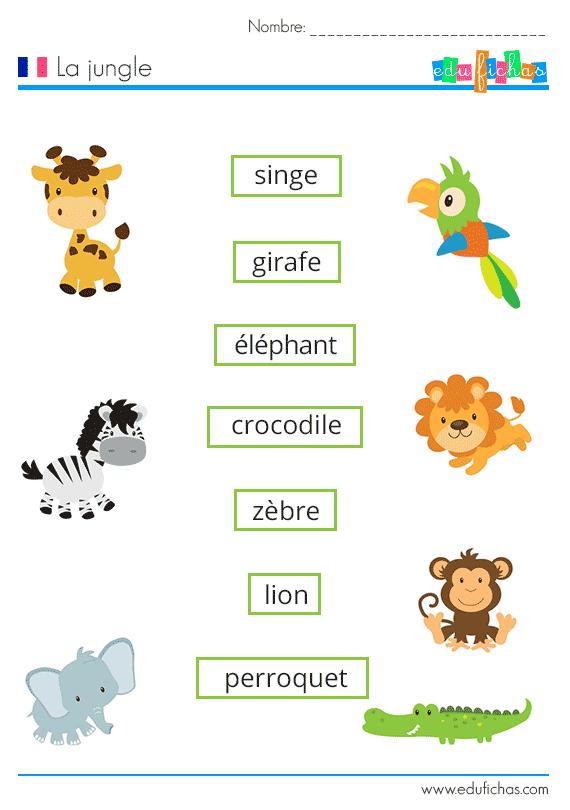 vocabulario de la jungla en franc u00e9s con ejercicio