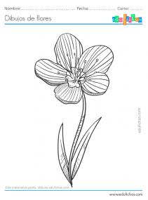 dibujo a lápiz de una flor