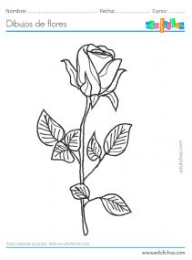 dibujo de una rosa