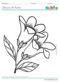 flores a lápiz