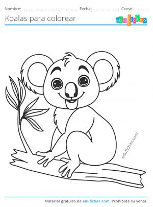 colorear koalas