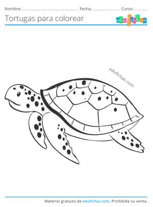 dibujo de una tortuga marina