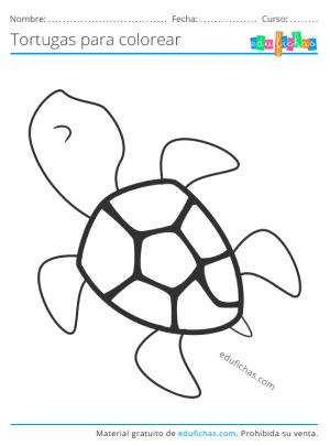 tortugas marinas para pintar